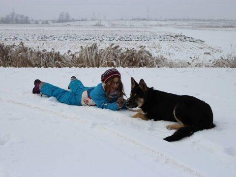 Itt a kutya, hol a kutya?
