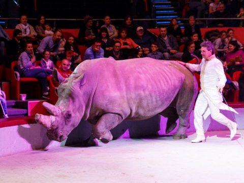 Változó cirkuszok