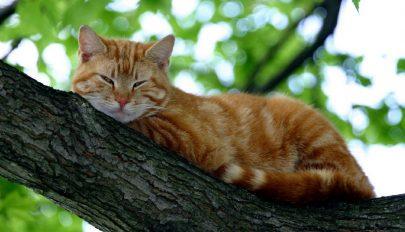 Veszélyes a macskaszerelem