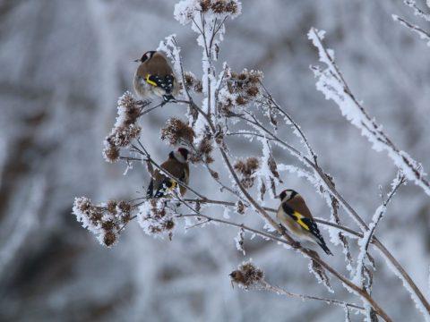 Az év madara