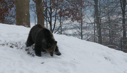 A vadvilág világnapja