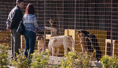 Vidéki kóbor kutyák