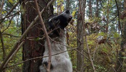 Megússza a kutyagyilkos