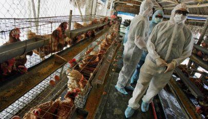 Fertőző állatbetegségek