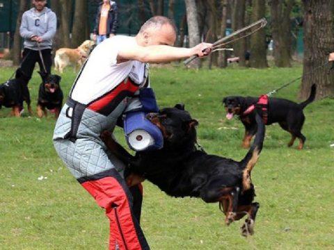 Szaporodó kutyatámadások