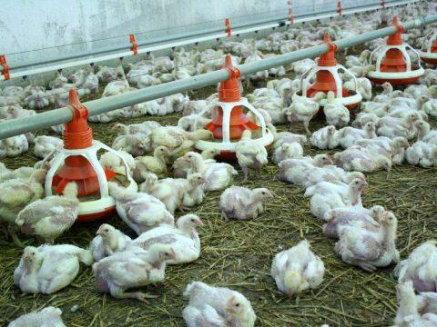 Nem találtak fertőzött tojást