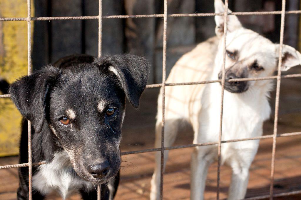 Kutyák befogása az Őrkőn
