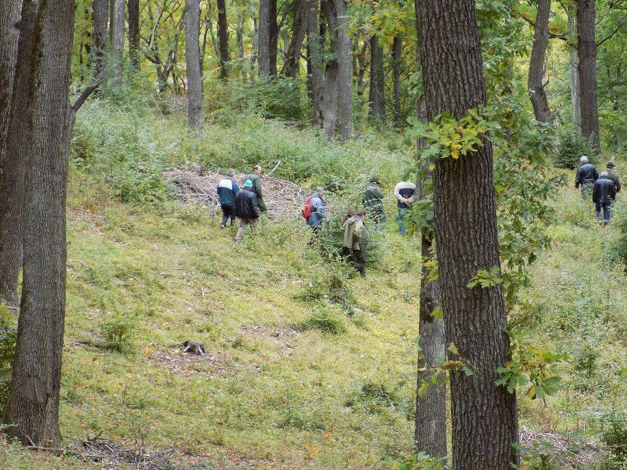 Hiába a sok ág az erdőben, hasznosításukat a törvény nem teszi lehetővé