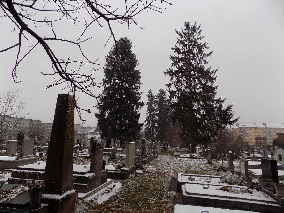 A baróti temető katolikus része. A fenyőfák sorsáról határozat született, az összest kivágják
