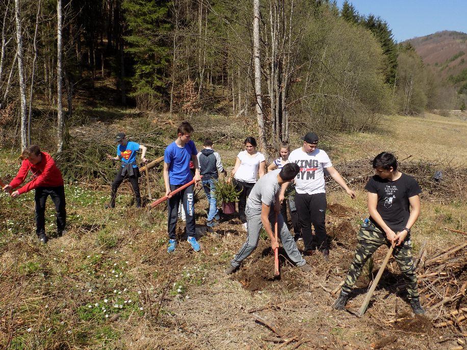 Háromezer facsemetét ültettek el Erdővidéken a csíkszeredai diákok