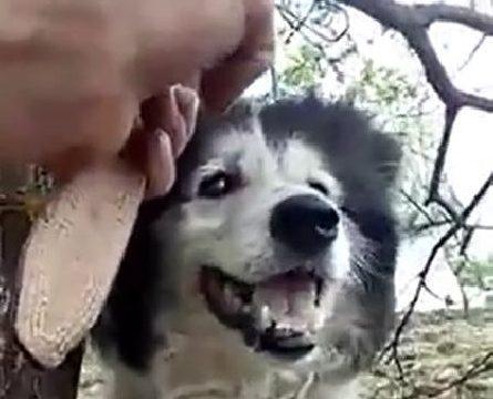 Nevetett, miközben gyilkolt