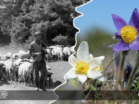 Juhok vagy virágok?