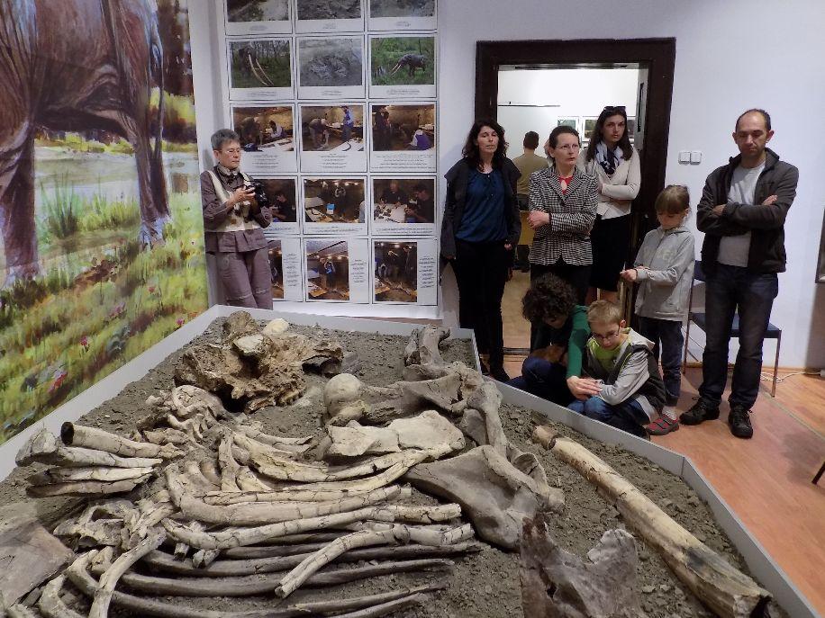 A négymillió éve élt masztodon csontjait, miután szinte teljes egészükben megmentették, most első ízben ugyanúgy ki is állították