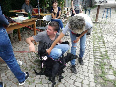 Kutyanap a Szimplában