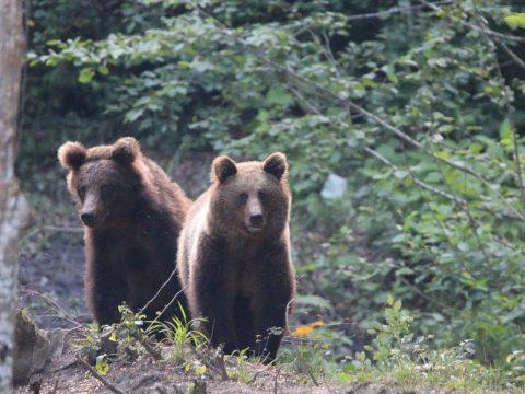 Ne szelfizz medvével!
