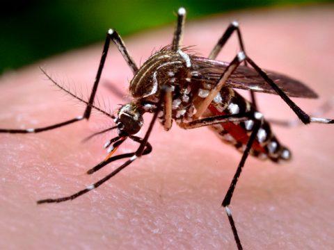 Ritka vírusos betegség Kézdin