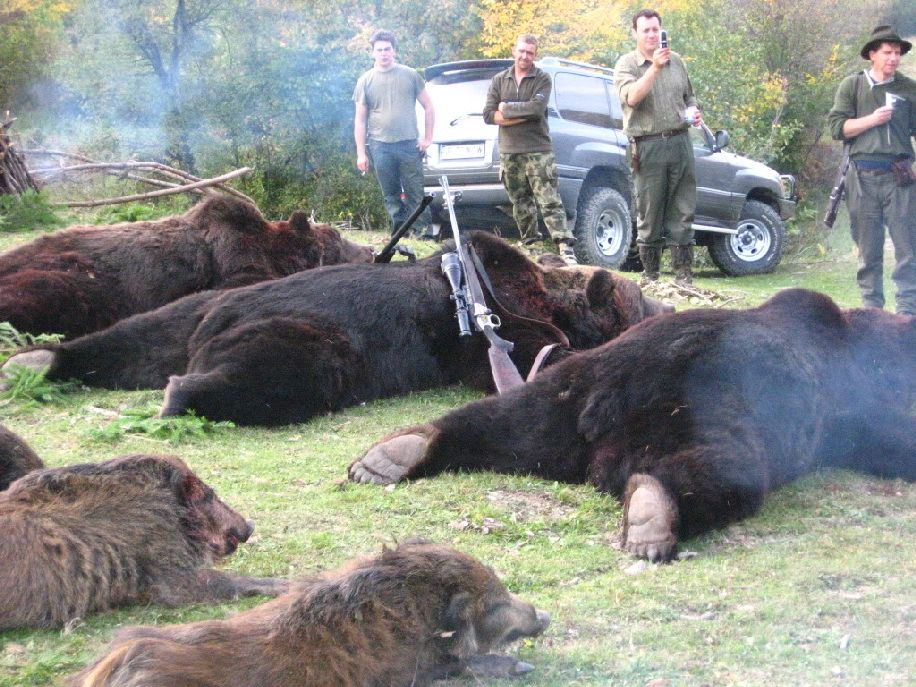 Két medvét kilőnek