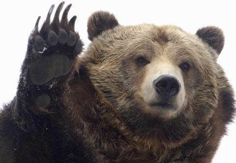Hat medvét kiemelnek
