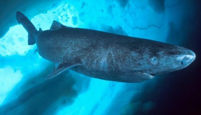 Megtalálták a Föld legöregebb gerinces állatát