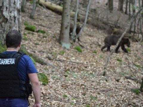 Medvéket kergető csendőrök