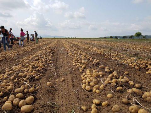 Fejlődő mezőgazdaságunk