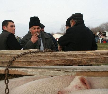 Süldőt, malacot, disznóhúst ismeretlenektől ne vegyünk. Archív felvétel