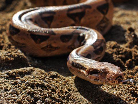 Hatalmas kígyótól mentették meg kutyájukat