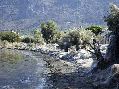 Pókinvázió egy görög tó partján