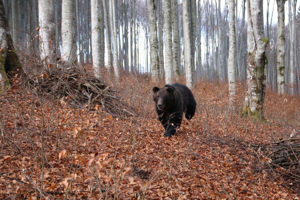 Medvefesztivál Székelyszáldoboson