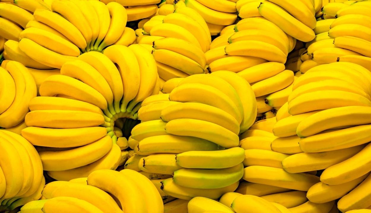 Több mint 6 tonna kokaint rejtettek a banánszállítmányba