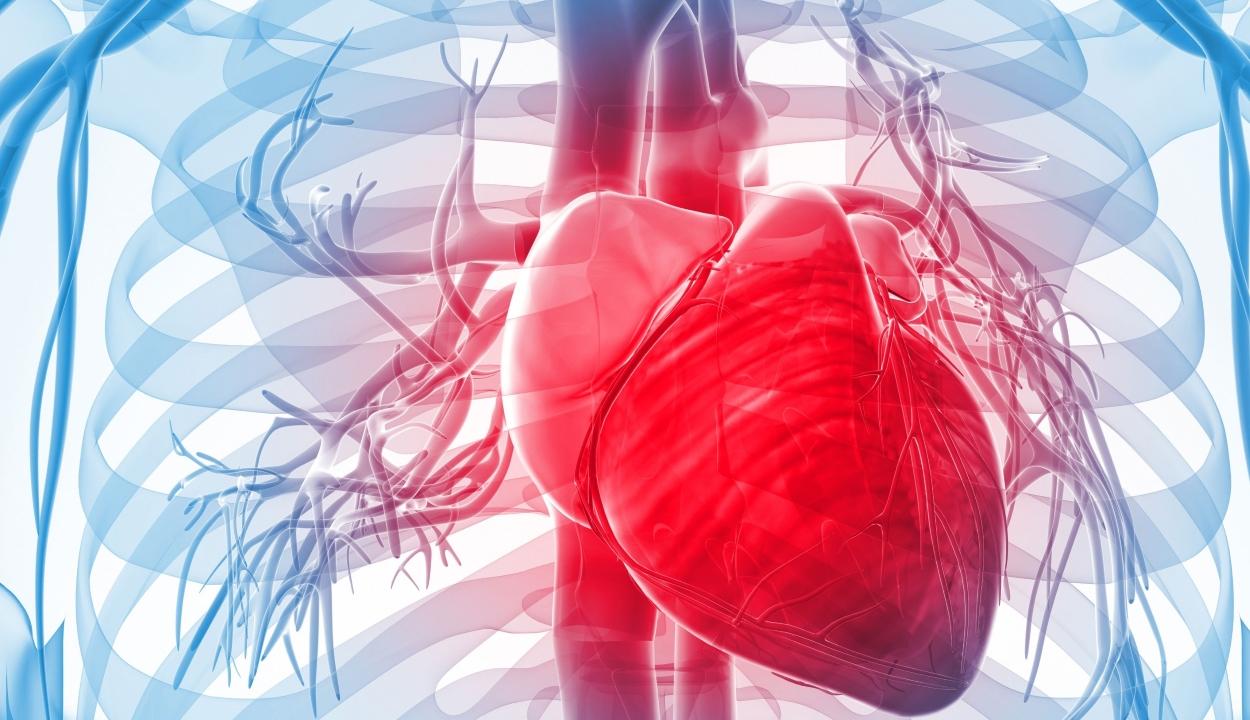 A szív- és érrendszeri betegségekben szenvedők negyede nem volt orvosnál a tavaly