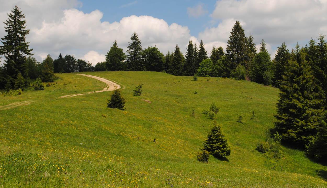 A megyei törvényszékre helyezték át az ozsdolai erdők visszaállamosításának perét