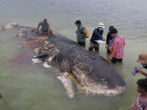 Hat kiló műanyagot találtak egy elpusztult bálna gyomrában