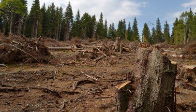 1,2 millió köbméter faanyag tűnt el az elmúlt öt évben a romániai nemzeti parkokból