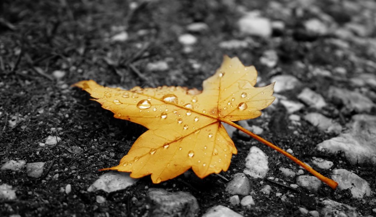 Hűvös lesz október vége, de novemberben még felmelegszik az idő