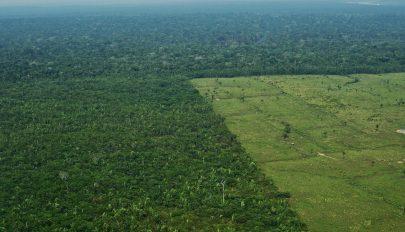 10 éve nem irtottak ki ennyi erdőt az Amazonas-medencében