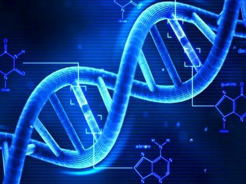 Nem a génjeinkben rejlik a hosszú élet titka