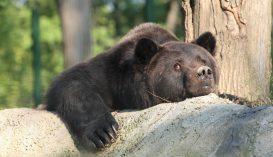 Máshol is jár a medve