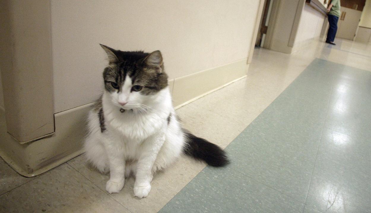 A macska, amely megérzi és jelzi, ha valaki hamarosan meg fog halni