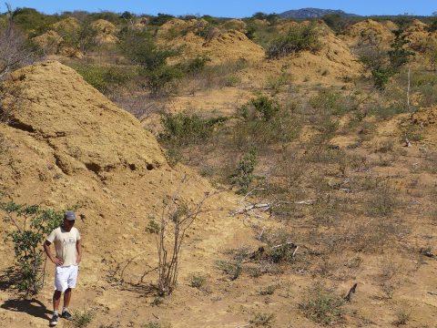 Nagy-Britannia méretű termeszkolóniát találtak Brazíliában
