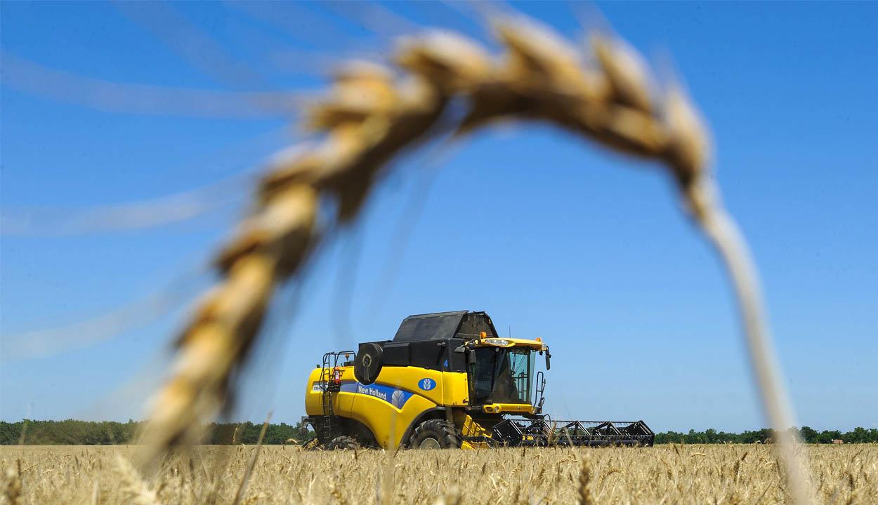 Mezőgazdasági miniszter: 40 százalékkal kisebb a búza hektáronkénti termésátlaga, mint tavaly