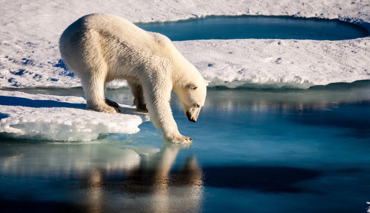 Megállíthatatlanul emelkedik a hőmérséklet az Északi-sarkon