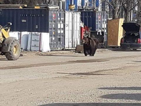 Medvét láttak a brassói Coresi bevásárlóközpont közelében