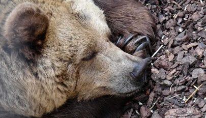 Hogyan élik túl az állatok a téli álmot?
