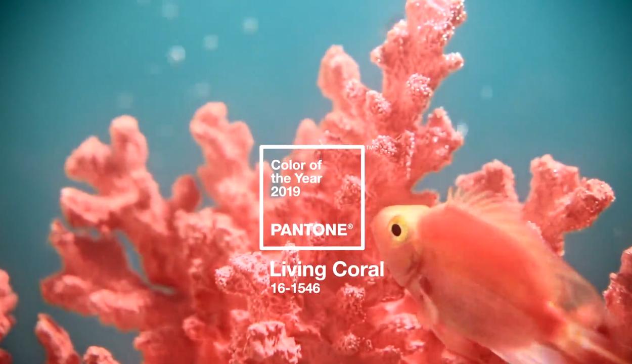 Az élő korall 2019 divatszíne