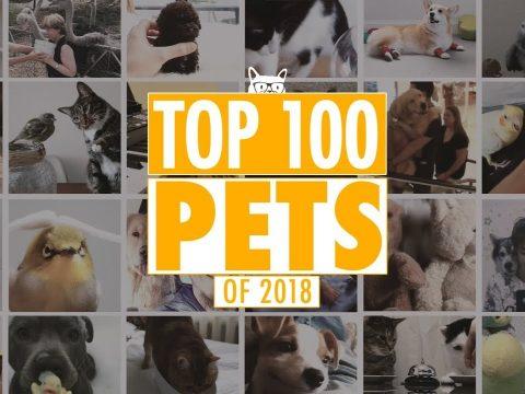 Ezek 2018 legviccesebb, legaranyosabb háziállatai