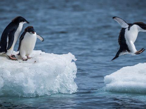 Érdekes módszerrel fagyasztanák újra a jégsapkákat