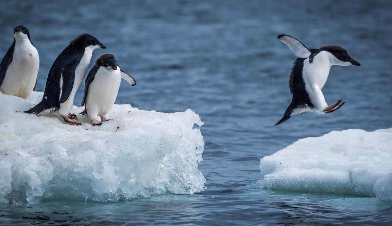 Vészesen fogy az Antarktisz jege