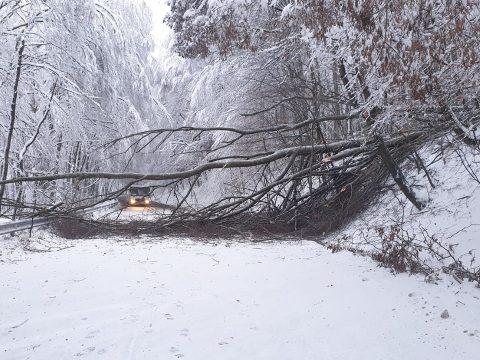 Több száz útmenti fát kivágnak Hargita megyében, mert a hó súlyától az úttestre dőlhetnek