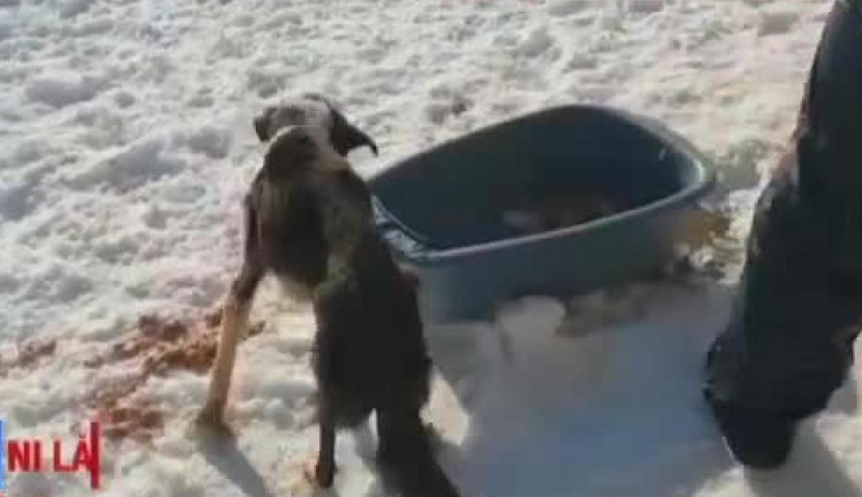 Csaknem húsz kutya tetemére bukkantak egy illegális állatmenhelyen
